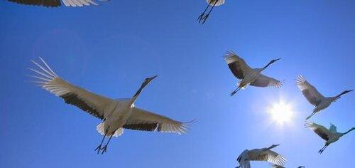 миграции птиц