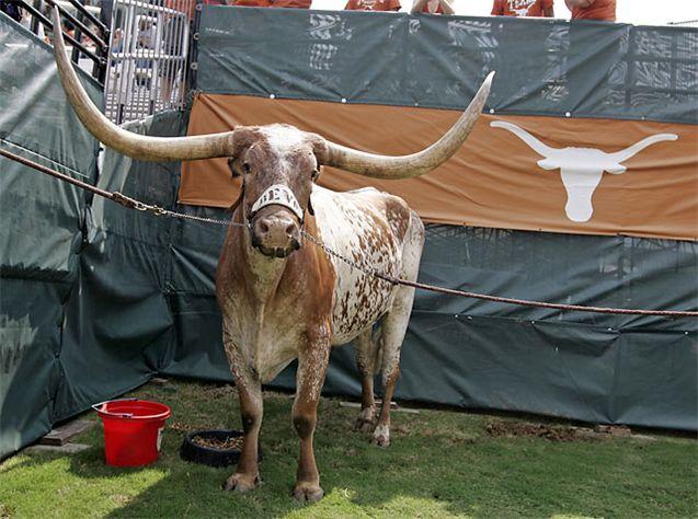 Живые талисманы в студенческом спорте / NCAA Top Real Animal Mascots - Bevo / Texas