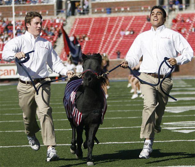 Живые талисманы в студенческом спорте / NCAA Top Real Animal Mascots - Peruna VII / Southern Methodist