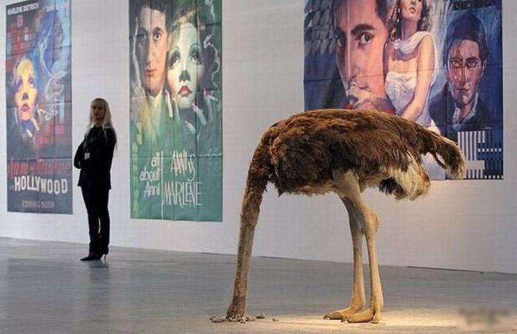 Зачем страус прячет голову в песок?