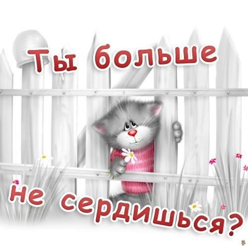 Ты больше не сердишся! Кот выглядывает из-за забора открытки фото рисунки картинки поздравления
