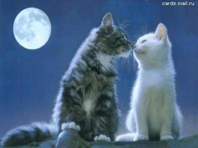 Открытка. Кот и кошка целуются на крыше на фоне луны. С днем поцелуя!