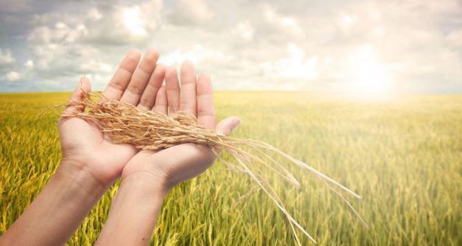 ВКрасноперекопском районе аграрии завершили уборку ранних зерновых культур урожая 2016 года