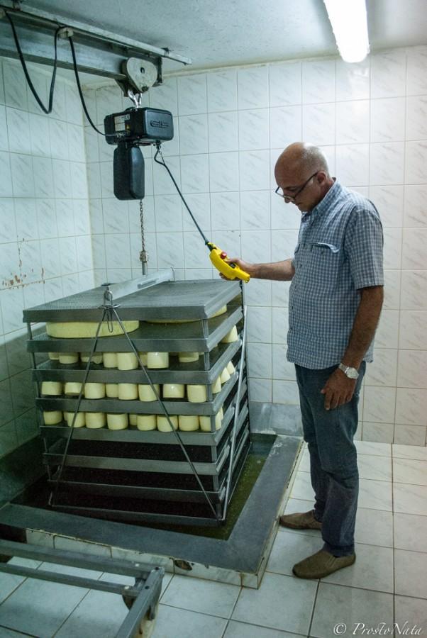 15. А Петр демонстрирует нам соляной раствор в специальном бассейне — тут головки сыра мокнут