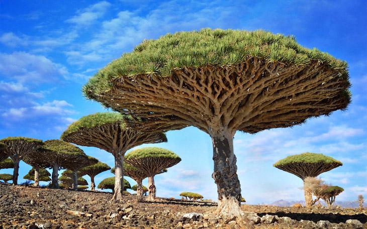 Источник: sergeydolya   №10. Остров Пасхи, Чили 1. Остров Пасхи, или Рапануи, принадлежит Чи