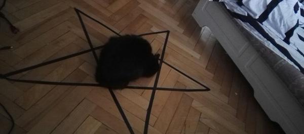 Слышал, что если кот увидит круг, то обязательно сядет в него
