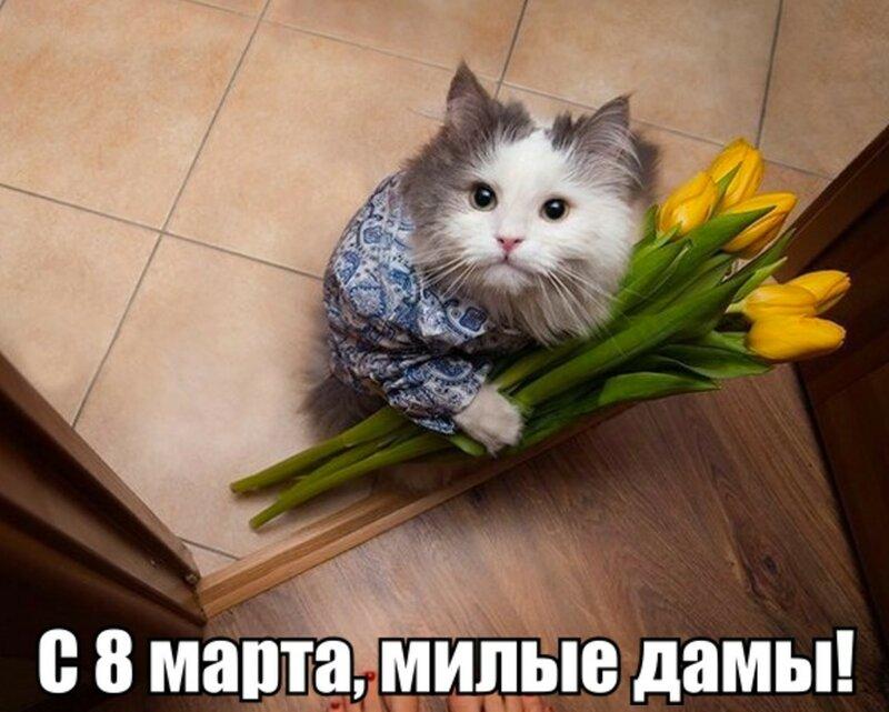 99px_ru_photo_233997_pushistij_kot_s_buketom_tulpanov_s_8_marta.jpg