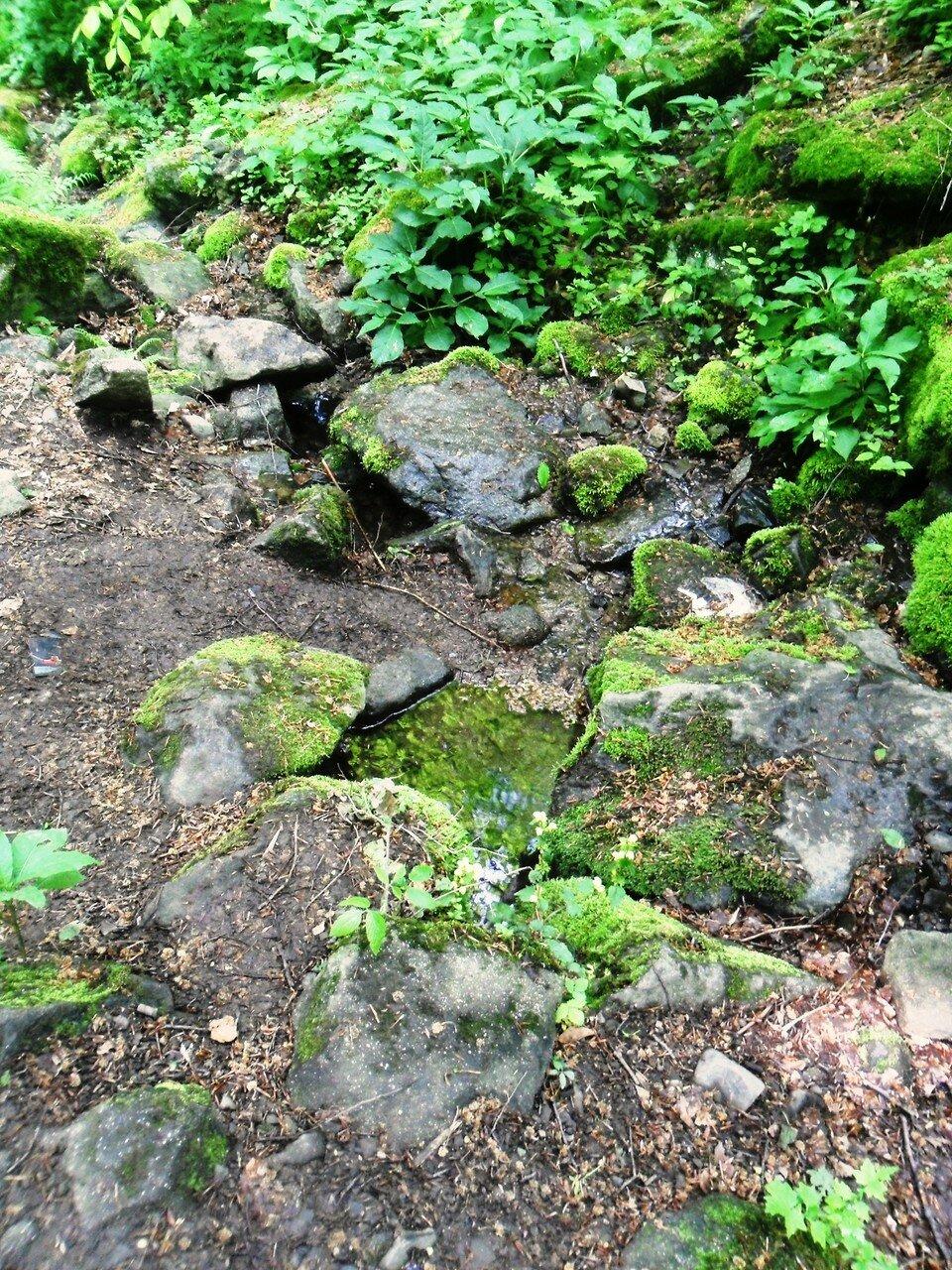 Камни, мхи, листья... в зелёном варианте мая ... SAM_7041.JPG