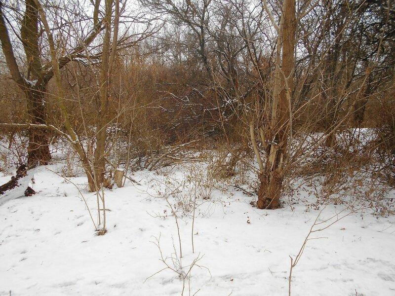 Снег, Зима, лес ... DSCN0824.JPG