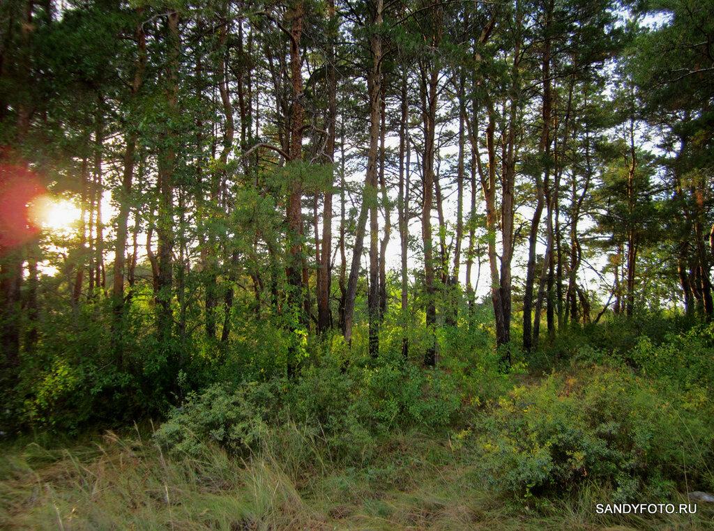 Просто лес [2 фото]