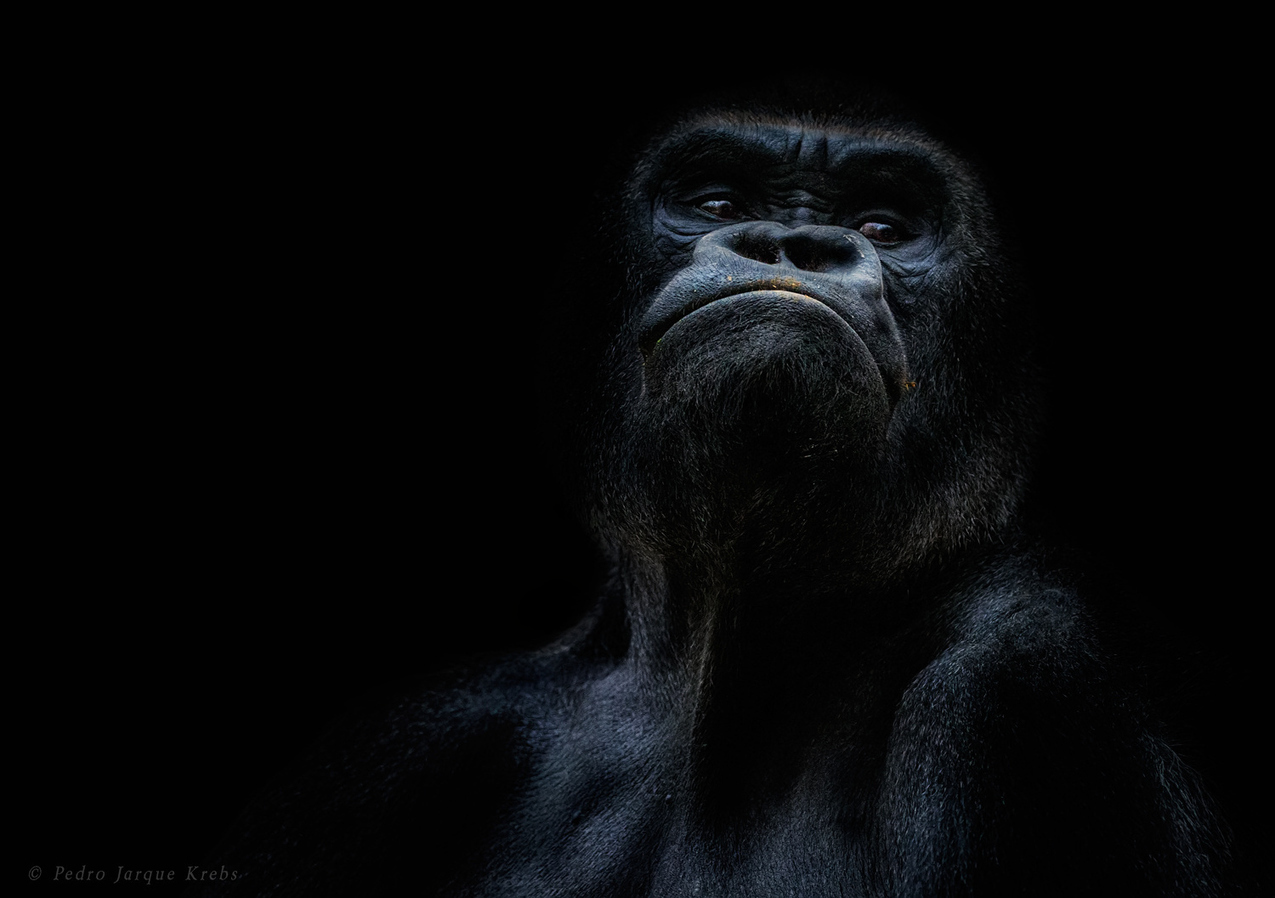 Портреты дикой природы Педро Хорке