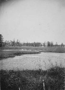 Озерко с водяной растительностью