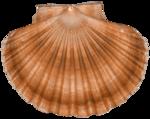 feli_syd_shell.png