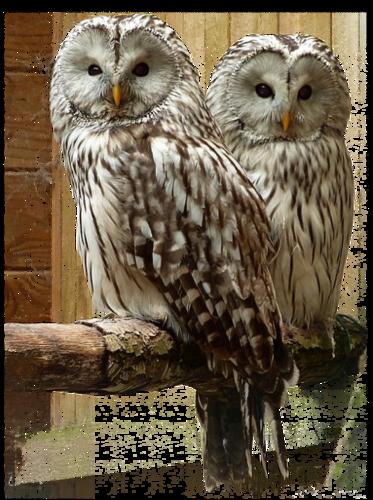 Ptice..... 0_d37e1_a007fce0_L