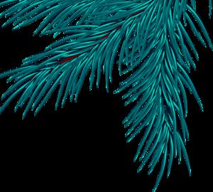 еловые ветки