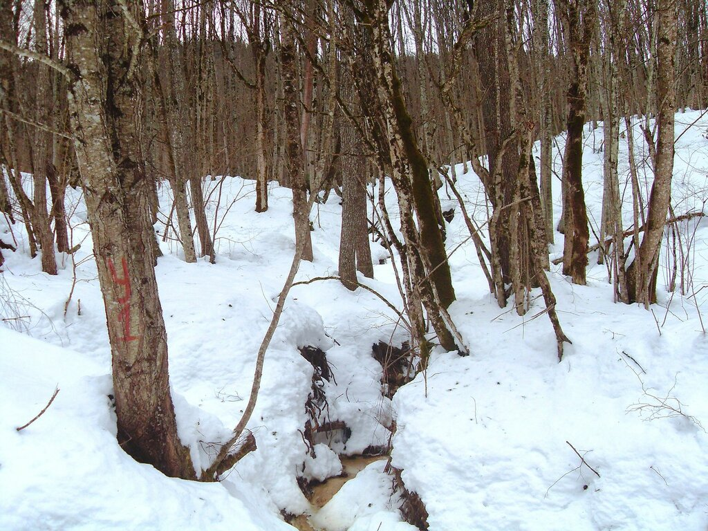 В лесах зимних, снежных ... SDC18613.JPG