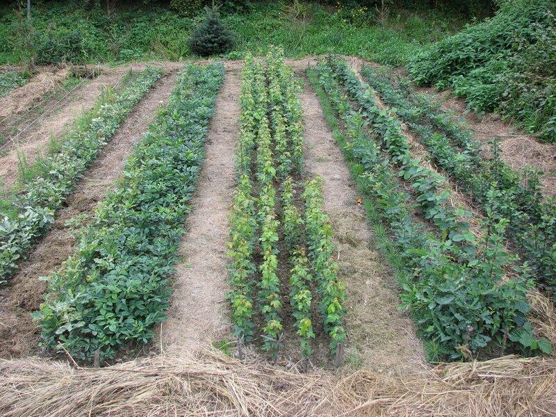 ...как и вынос из почвы питательных элементов с урожаем, определяется не на один год, а на ротацию севооборота, т.е.