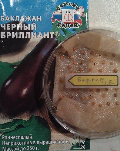 Баклажан Чёрный Бриллиант. Агрофирма Седек