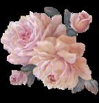 rosenrosa075.png