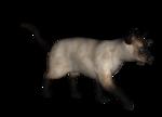 сиамские кошки (19).png