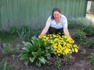 Роскошные кусты дороникума и безвременника в цветнике Татьяны Алексеевны Шестериной.