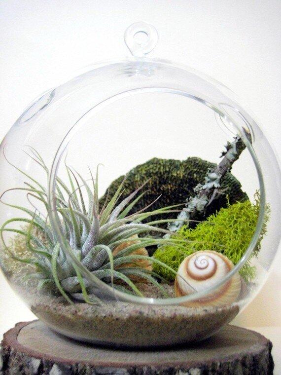 Флорариум своими руками для кактусов