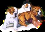 Собаки  0_57c7b_c8f2a50a_S