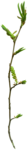 «pixelfairy_thankyouct» 0_5d7db_2bc0933f_S