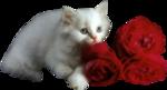 Кошки 5 0_50a16_ee47876a_S