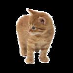 Кошки 5 0_50a27_5a9d68d7_S