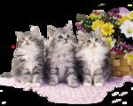 Кошки 5 0_52034_972be223_S