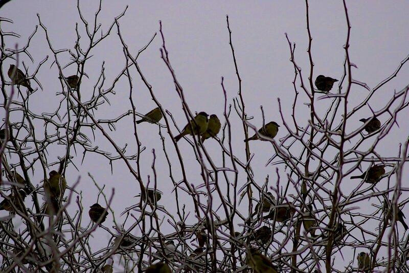 птицы в хмурости и наледи