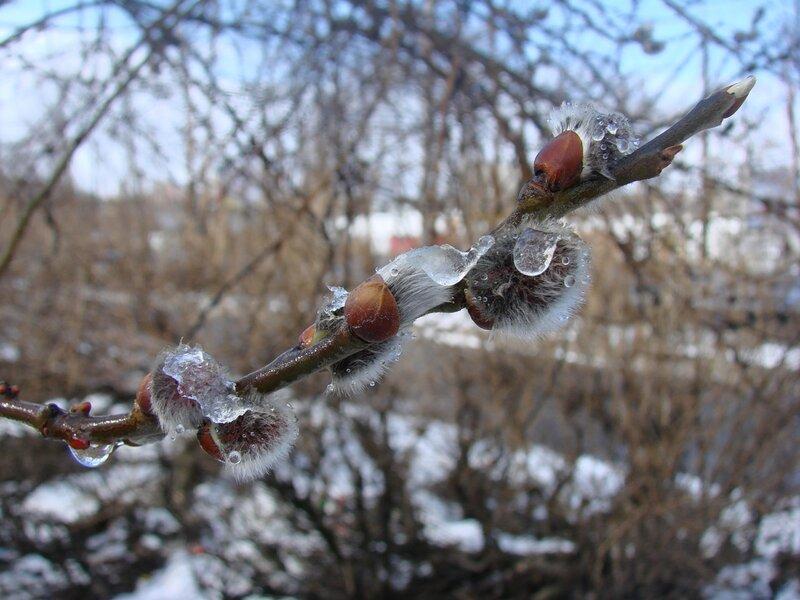 среди жителей фото весна в мурманске получения тепловой энергии