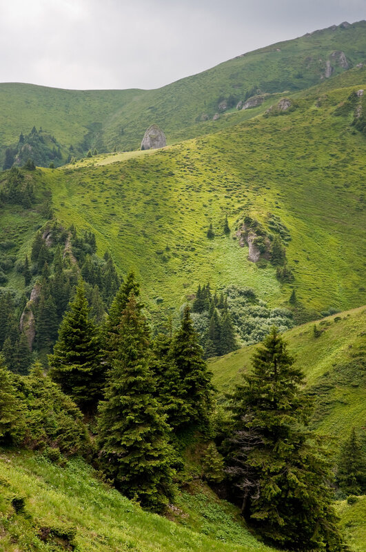 Green pine trees on mountain slopes