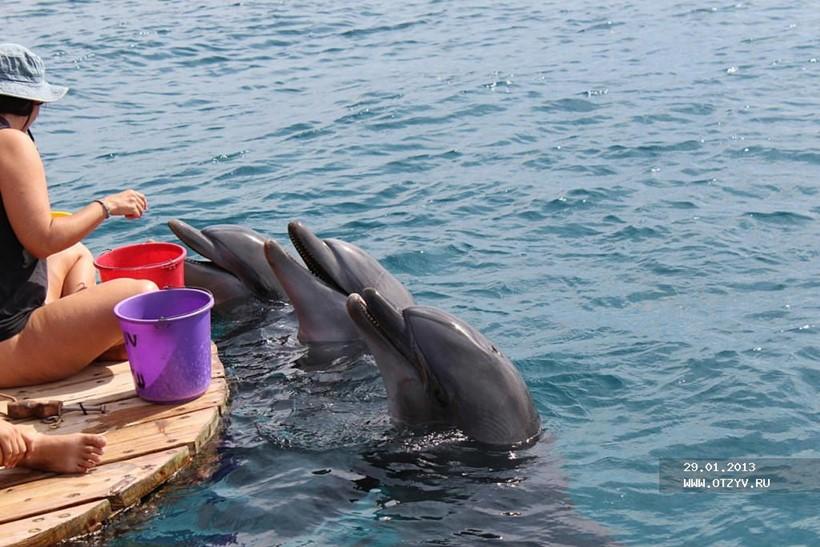 Беременная женщина и дельфин акушер 0 12e249 c79303bf orig