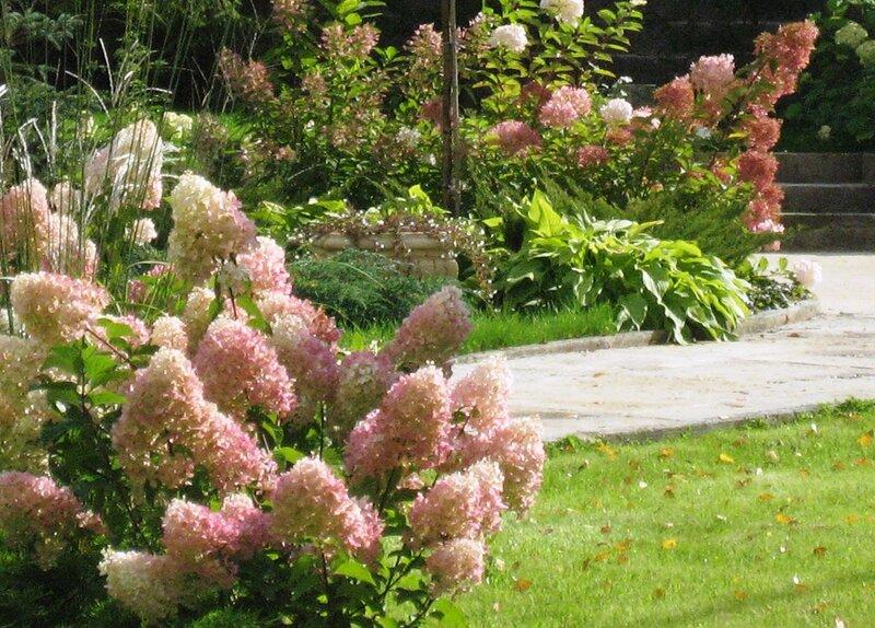 Дивный сад, роз и гортензий