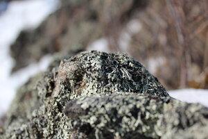 Камни покрыты слоем лишайника.