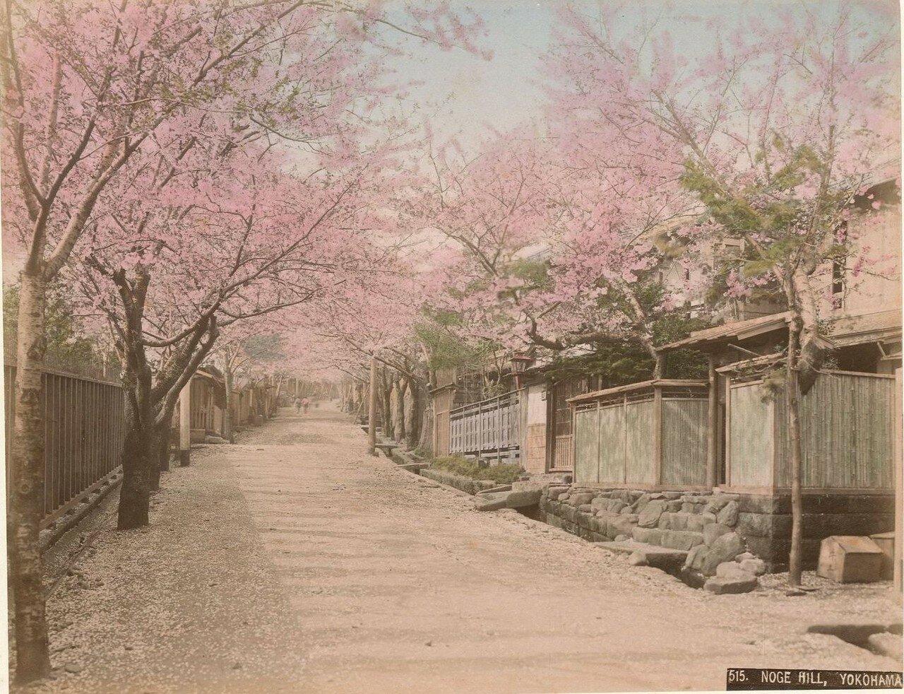 Иокогама. Ноге Хилл