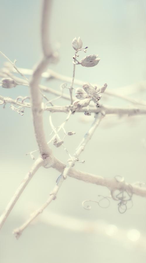 фото весенней природы