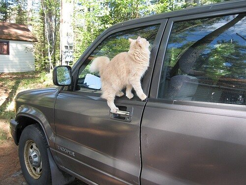 самые смешные кошки фото. кошки смешные самые смешные кошки фото.