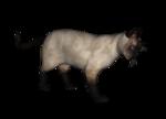 сиамские кошки (14).png
