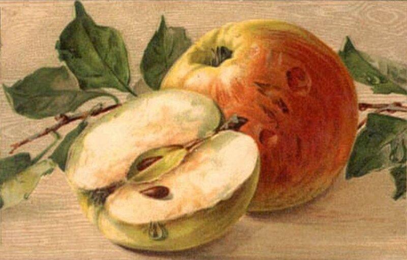 К. Кляйн. Яблоки.