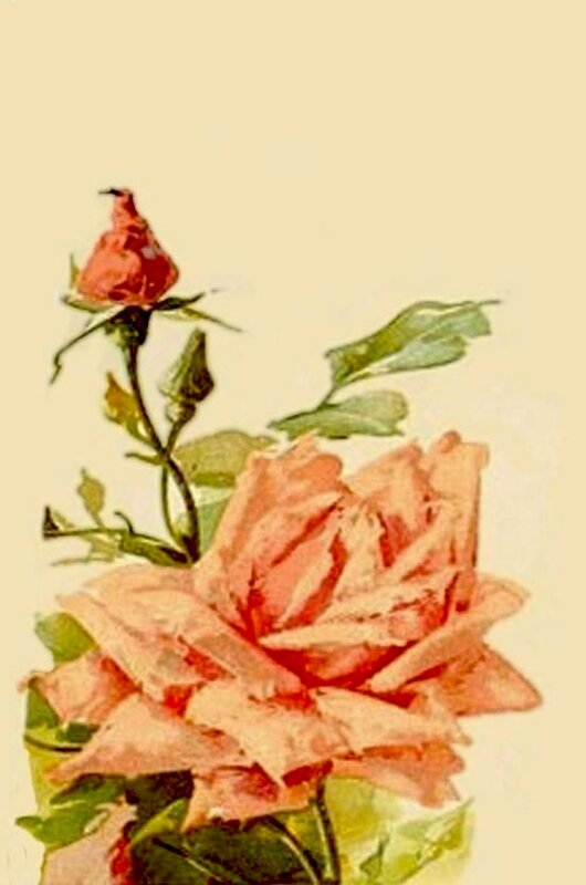 К. Кляйн. Роза с бутонами.