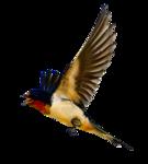 Птицы  разные  0_564d1_9a18d6a2_S