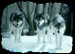 Лиса,волк  0_50916_63464550_S