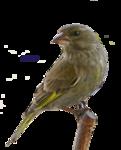 Птицы  разные  0_51c57_3a4bc220_S
