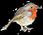 Птицы  разные  0_51c5c_2b22c970_S