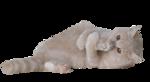 Кошки 5 0_5202e_363484a2_S