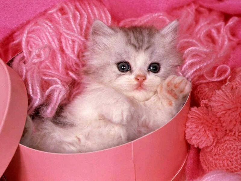 Кошки  0_52939_9bda191e_XL