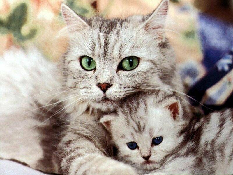 Кошки  0_52948_b4fd1bd7_XL